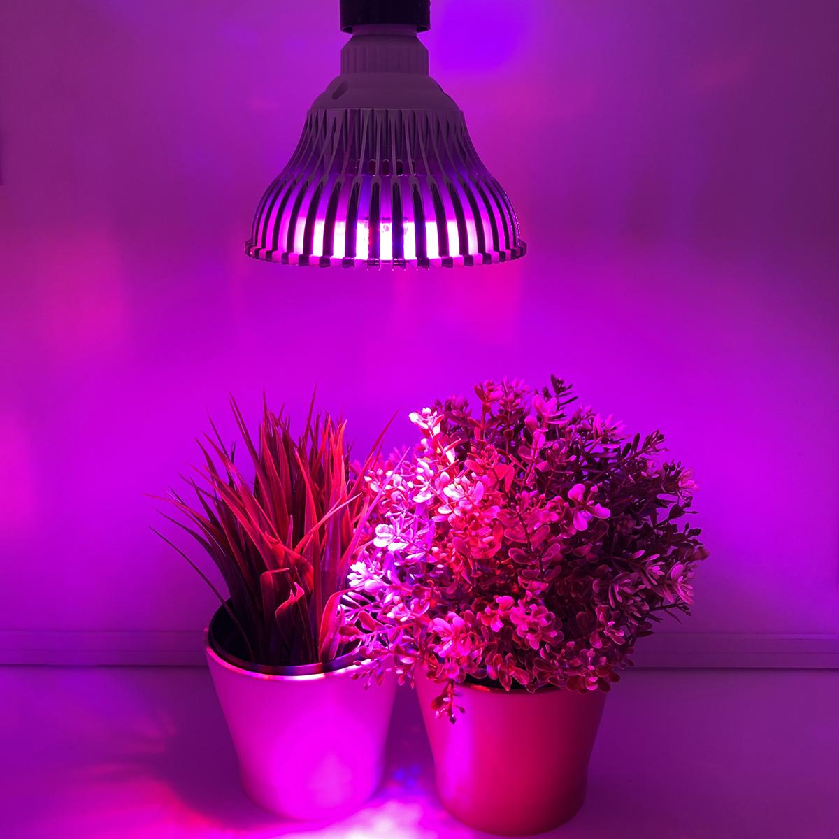 обычная светодиодная лампа для рассады